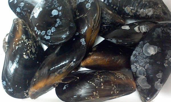 コストコムール貝